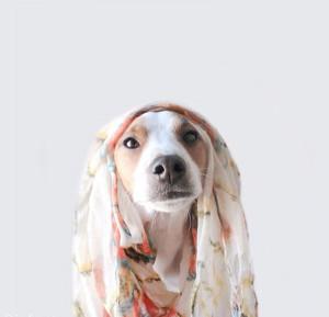 dogsofinstagram1