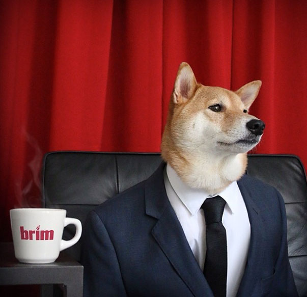mensweardog1