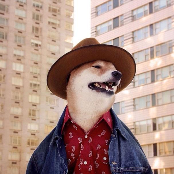 mensweardog2