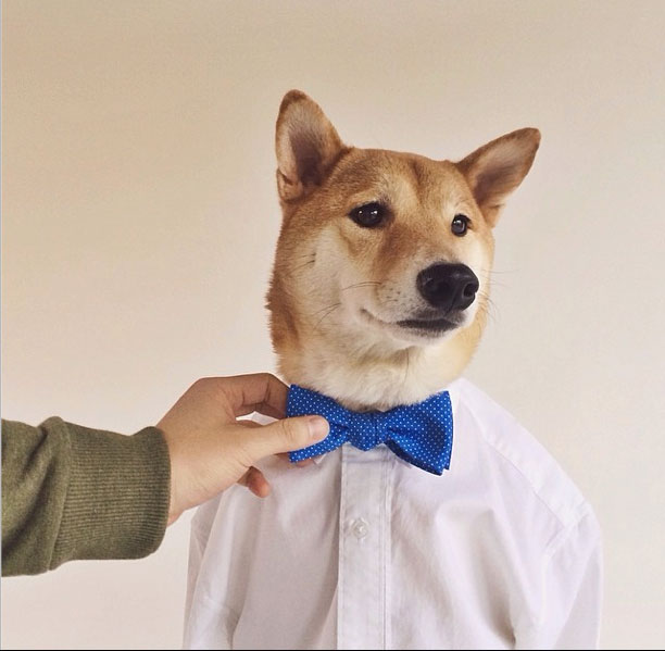 mensweardog4