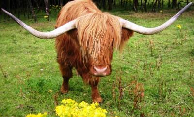 Manger en Écosse