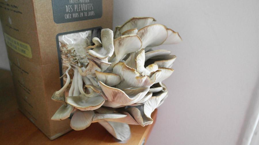 la-coutch-blog-pret-a-pousser-kit-champignons-pleurotes-gris-13