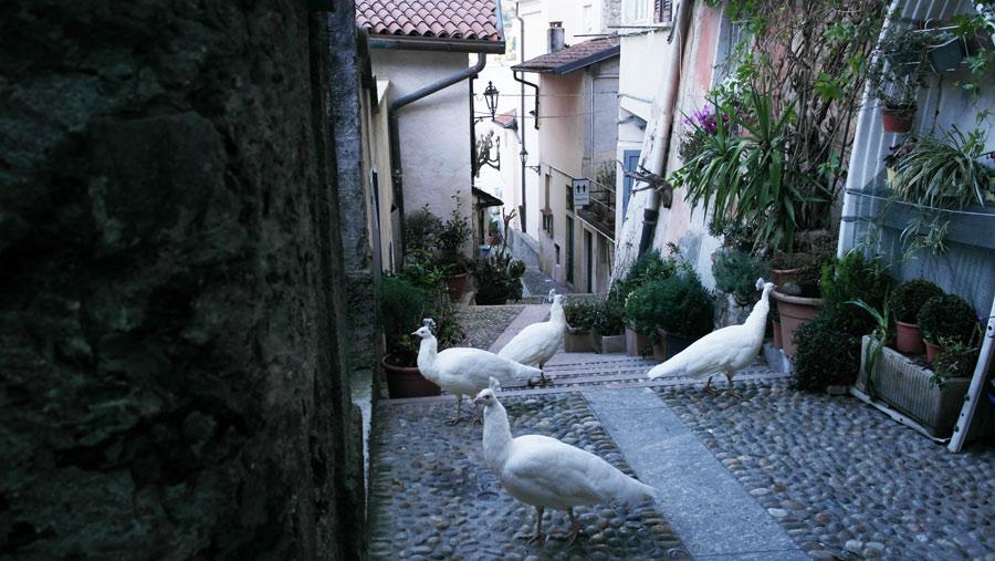 la-coutch-blog-voyage-lombardie-lacs-italiens-stresa-isola-bella7