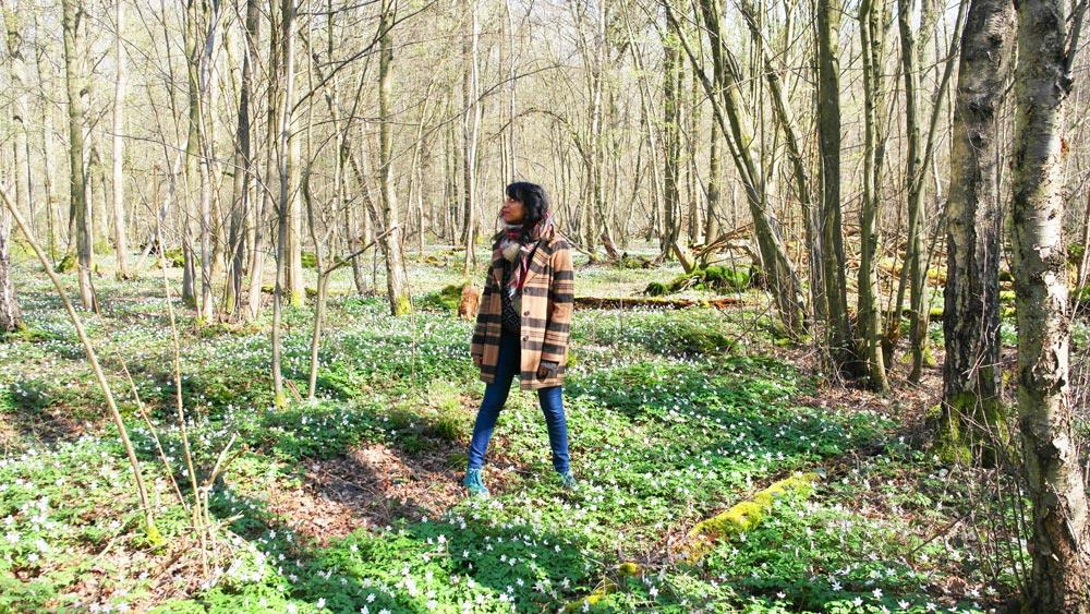 Promenons-nous dans les bois…