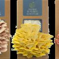 la-coutch-blog-concours-100e-articleles-3-kits-a-champignons-pret-a-pousser