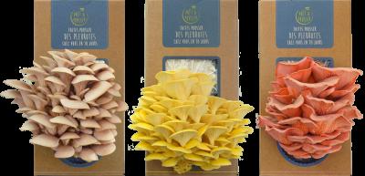 CONCOURS (terminé) 100e article sur le blog : gagnez votre kit de champignons !
