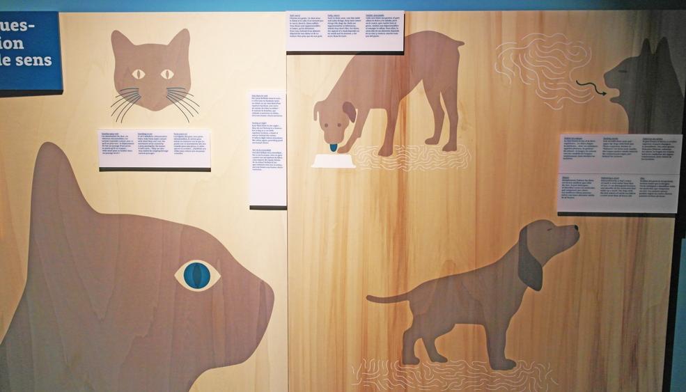 la-coutch-blog-coutch-coeur-8-expo-chiens-chats-cite-des-science3