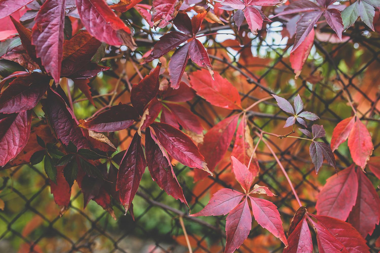 la-coutch-blog-voici-l-automne.2