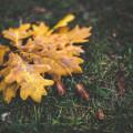 la-coutch-blog-voici-l-automne.3