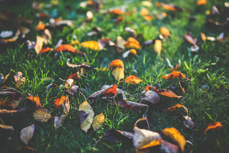 la-coutch-blog-voici-l-automne