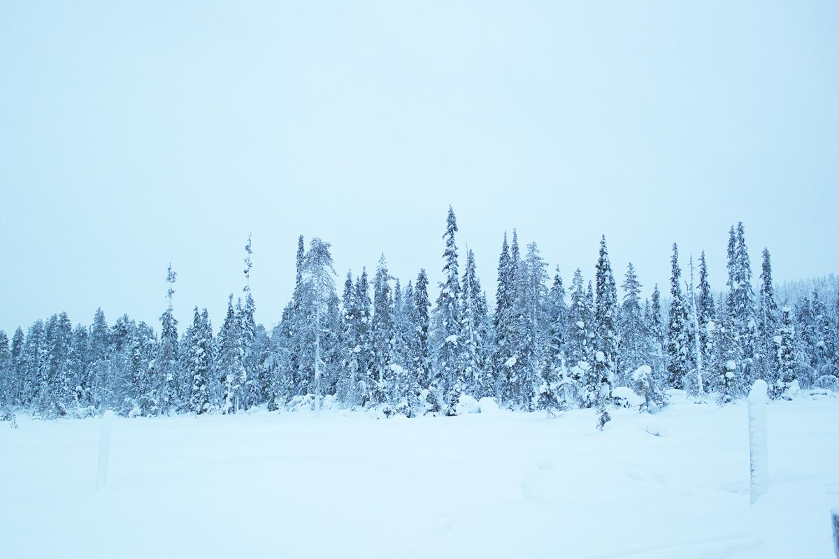 la-coutch-blog-lifestyle-voyage-finlande-laponie-ride-huskies2