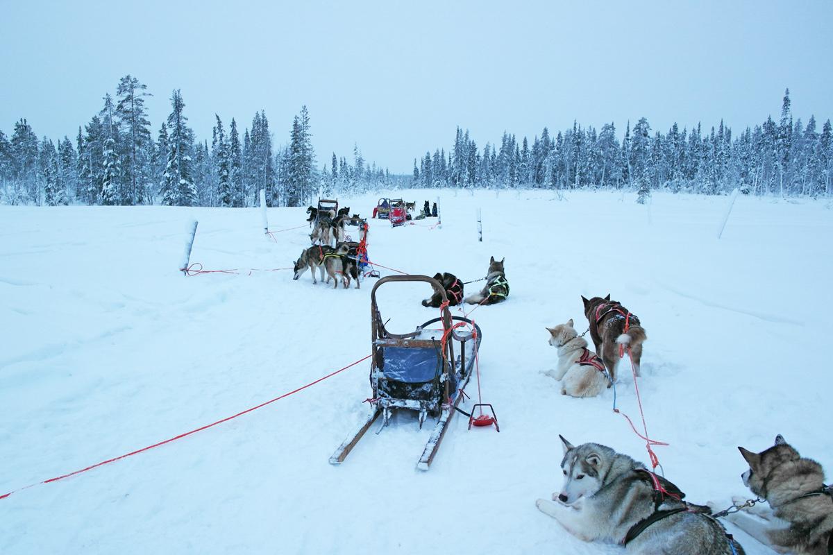 la-coutch-blog-lifestyle-voyage-finlande-laponie-ride-huskies4