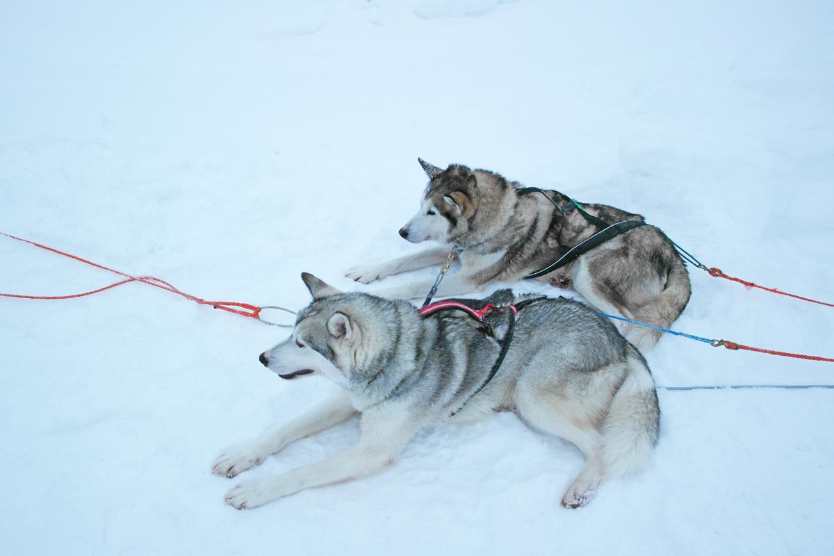 la-coutch-blog-lifestyle-voyage-finlande-laponie-ride-huskies6