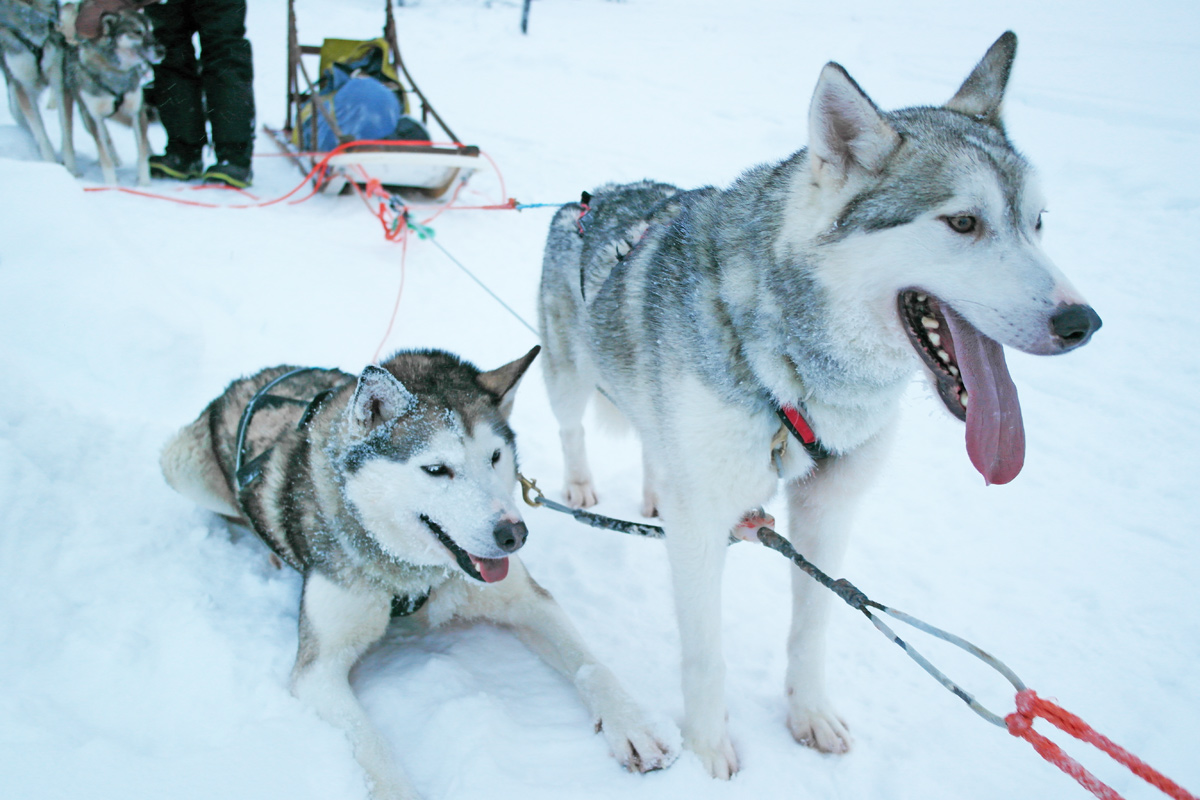 la-coutch-blog-lifestyle-voyage-finlande-laponie-ride-huskies9