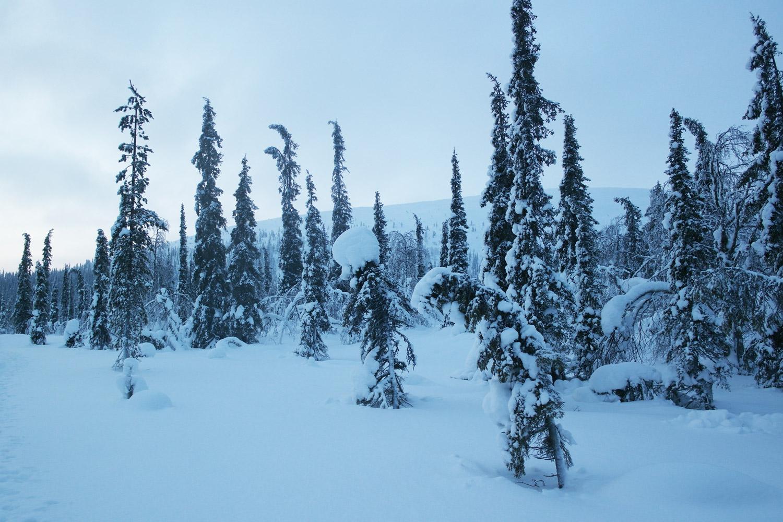 la-coutch-blog-voyage-laponie-finlande-trek-raquettes17