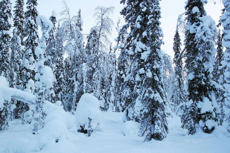 la-coutch-blog-voyage-laponie-finlande-trek-raquettes19