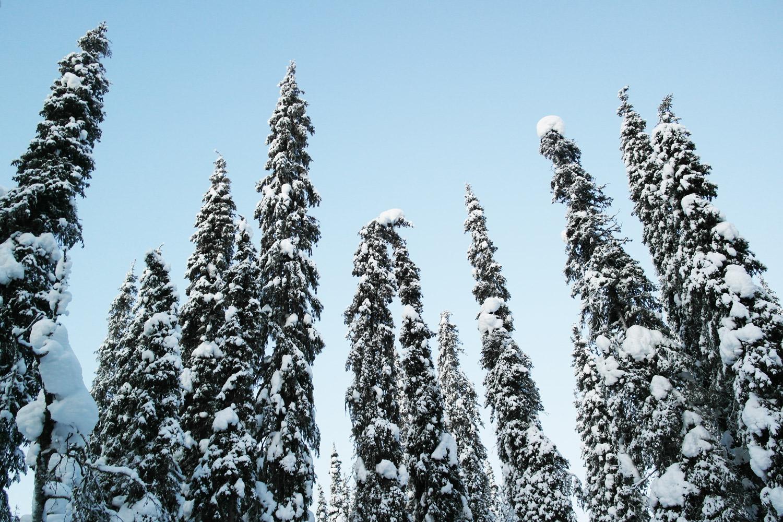 la-coutch-blog-voyage-laponie-finlande-trek-raquettes30