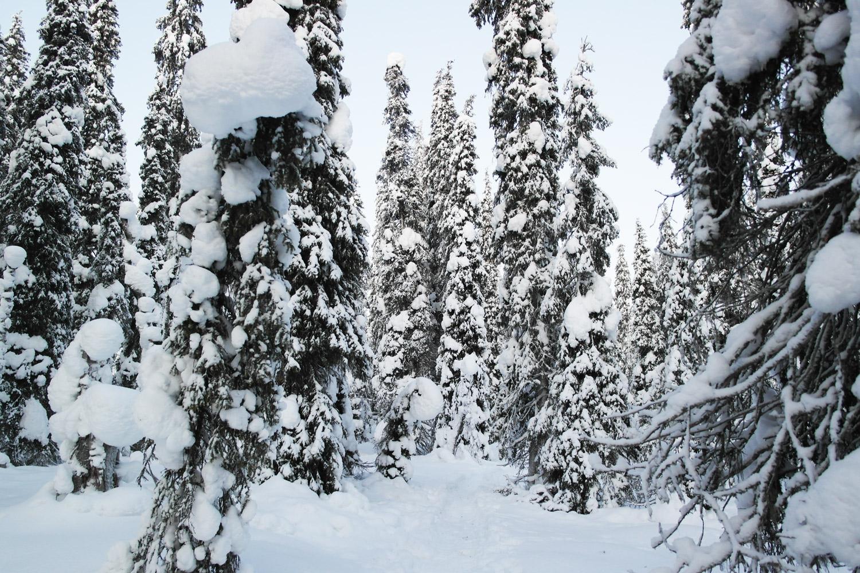 la-coutch-blog-voyage-laponie-finlande-trek-raquettes31