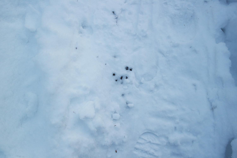 la-coutch-blog-voyage-laponie-finlande-trek-raquettes33