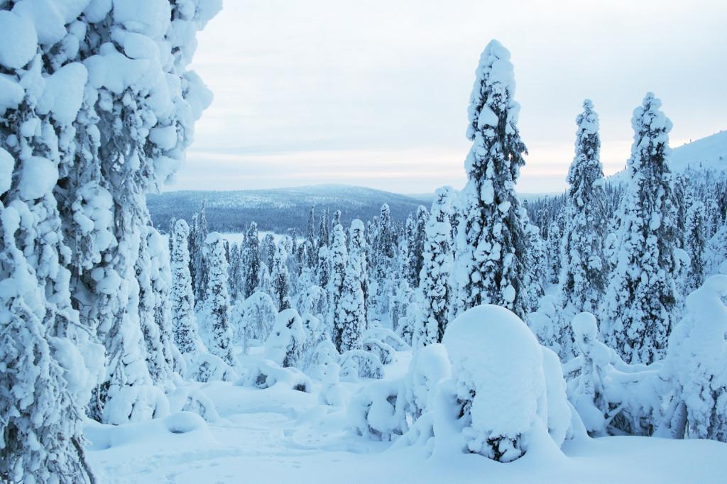 Mon voyage en Laponie : 3 jours de trek en raquettes