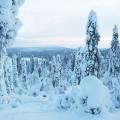 la-coutch-blog-voyage-laponie-finlande-trek-raquettes6
