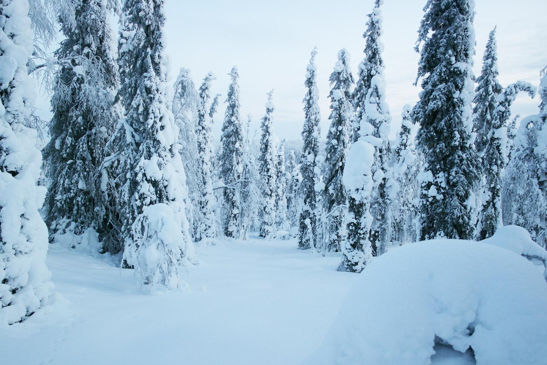 la-coutch-blog-voyage-laponie-finlande-trek-raquettes8
