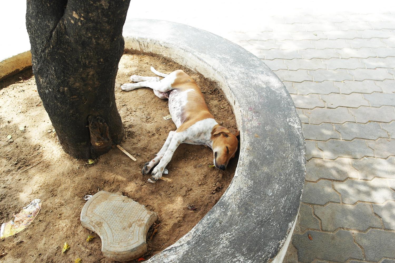 la-coutch-blog-lifestyle-voyage-inde-du-sud-velankanni