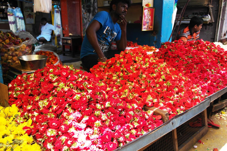 la-coutch-blog-voyage-inde-du-sud-pondichery-escapade15