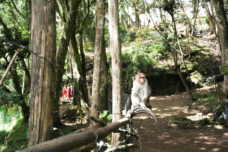 la-coutch-blog-lifestyle-voyage-decouverte-du-tamil-nadu-kodaikanal-montagnes-indienne1