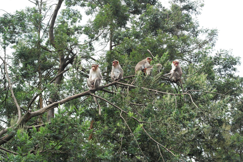 la-coutch-blog-lifestyle-voyage-decouverte-du-tamil-nadu-kodaikanal-montagnes-indienne4
