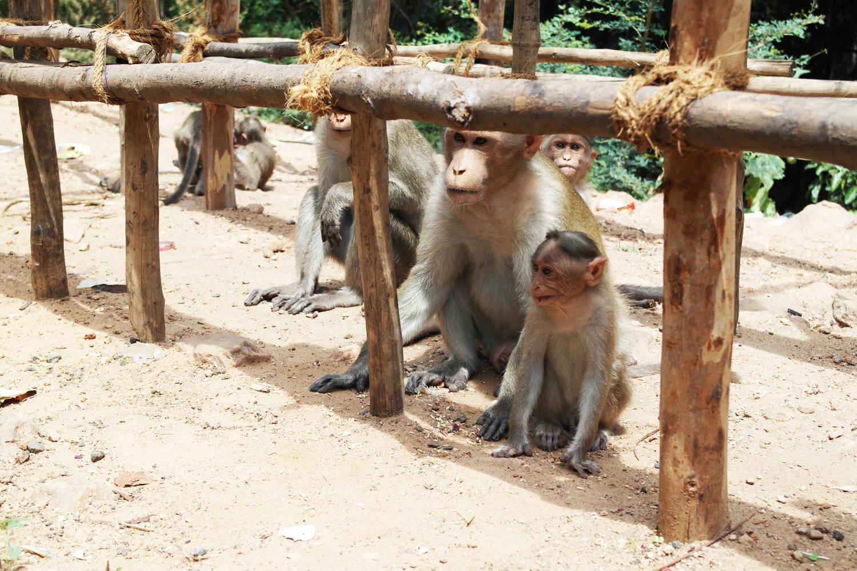 la-coutch-blog-lifestyle-voyage-sud-inde-tamil-nadu-madurai4