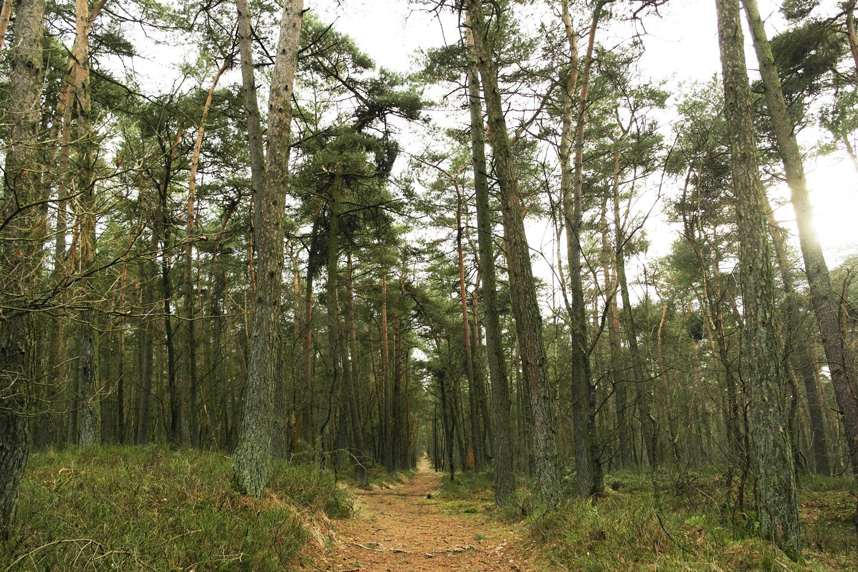 la-coutch-blog-voyage-48h-dans-une-yourte-mongole-en-hollande-pays-bas2