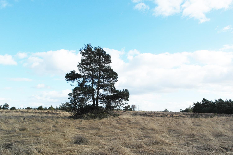 la-coutch-blog-voyage-48h-dans-une-yourte-mongole-en-hollande-pays-bas5