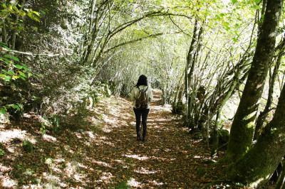 4 jours dans les bois